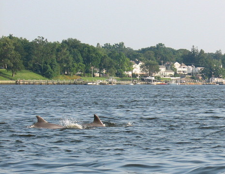 Fair_haven_dolphins