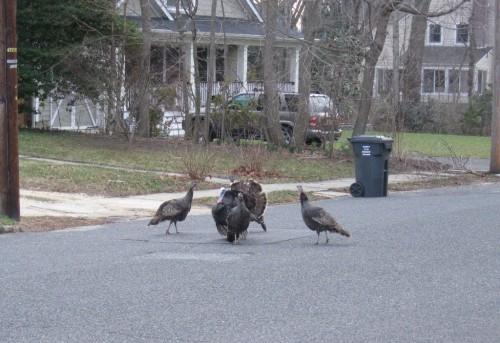 fh-turkeys