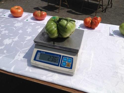 ls tomato 2 083113