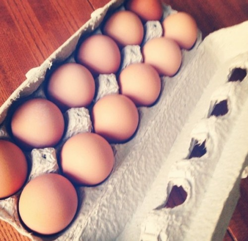 hauser eggs