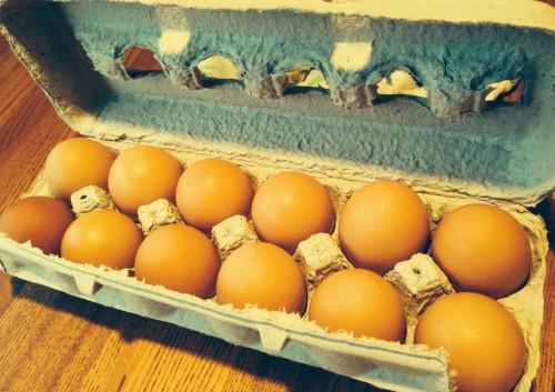 hauser_eggs