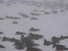 rumson geese012114 1