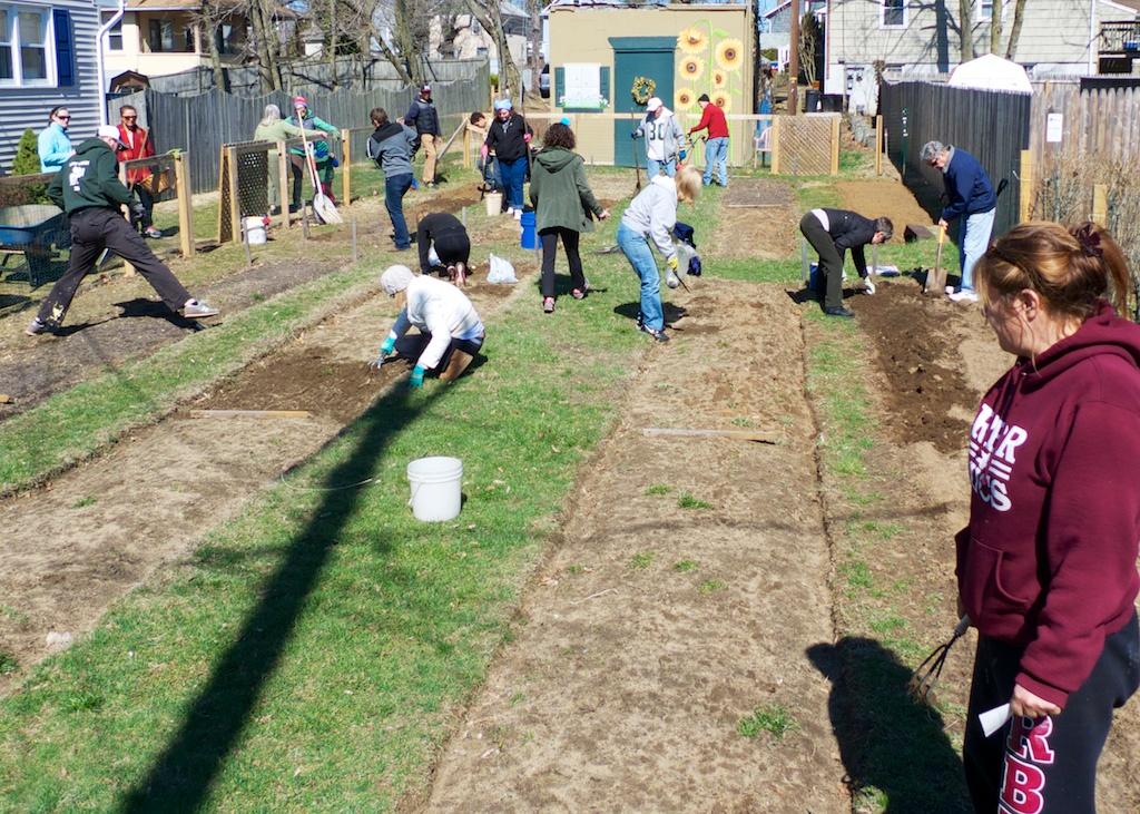 community garden 2014 4