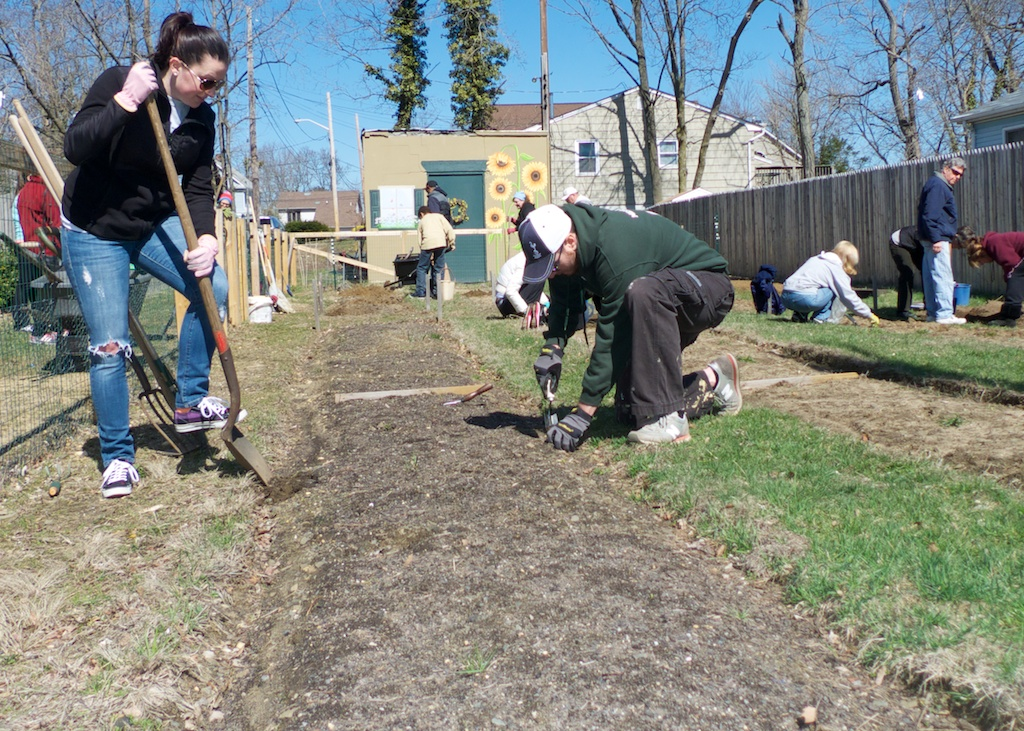 community garden 2014 6