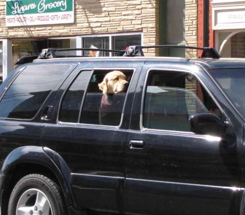 rb dog 2 041014
