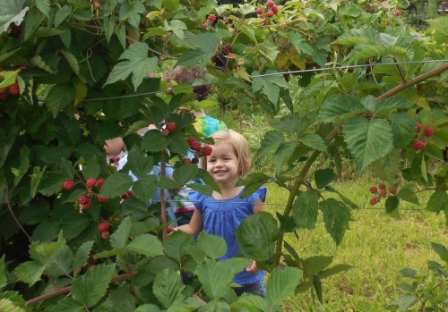 072614 Parker berries12
