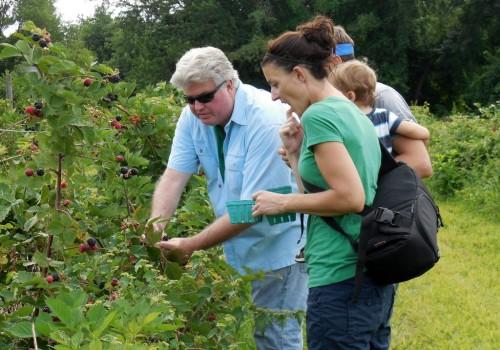 072614 Parker berries14