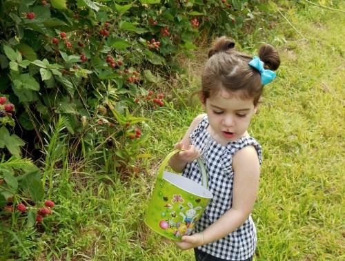 072614 Parker berries19