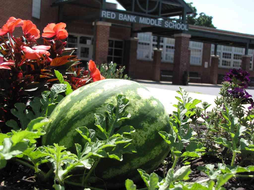 rbms watermelon 081414