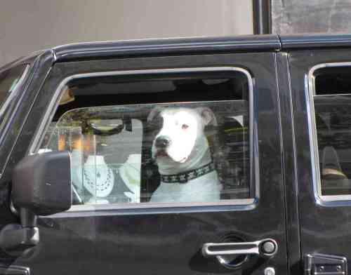 rb dog 101614