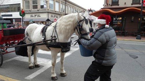 112914 horseride2