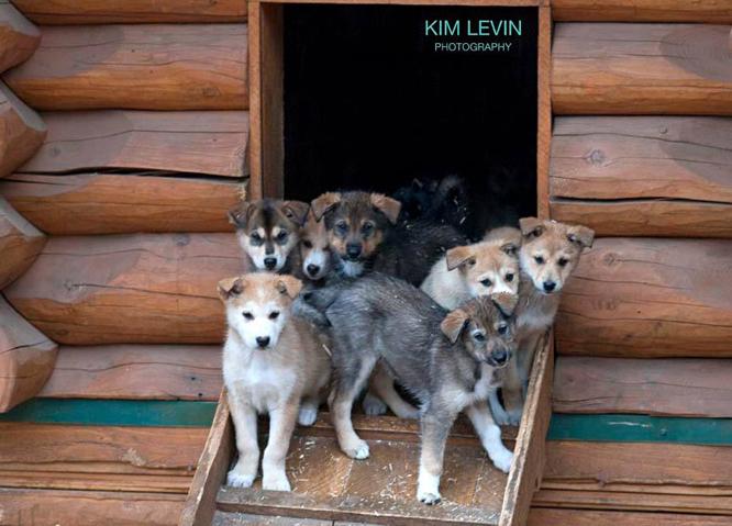 kim_levin_photo