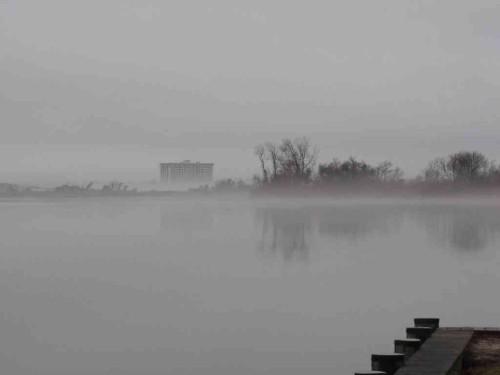 shrew riv fog 031415