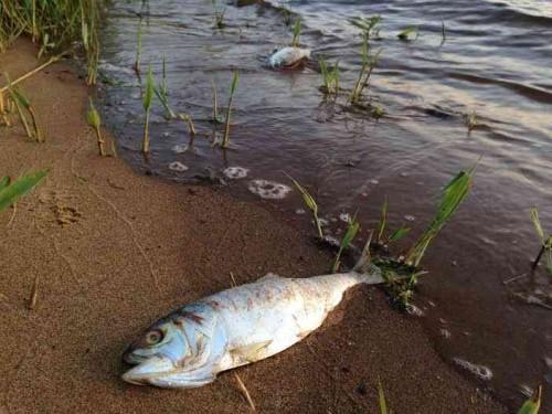 navesink fish 051415 1