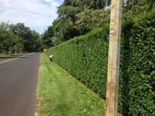 rumson hedge 071315
