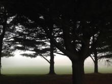 LS fog 090215