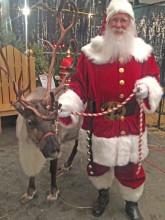 Sickles reindeer