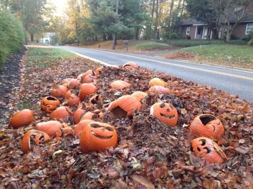 rumson pumpkins 110515