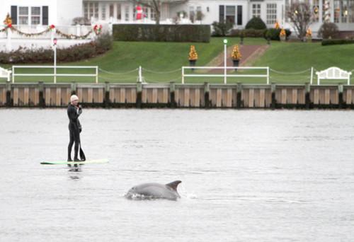 Dolphin longfield Dec 2015 4