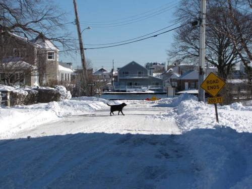 snow dog 012416