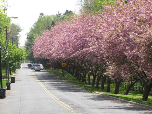fh road trees 042616