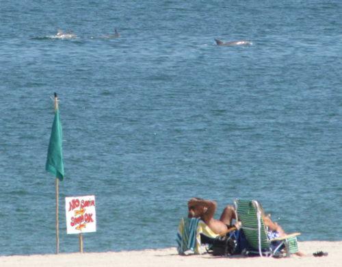 sb dolphins 081916 1