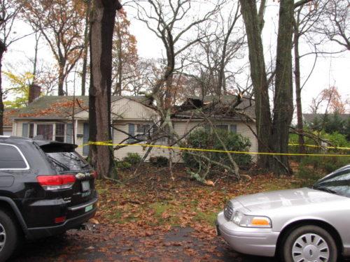 h-tree-fall-113016-2