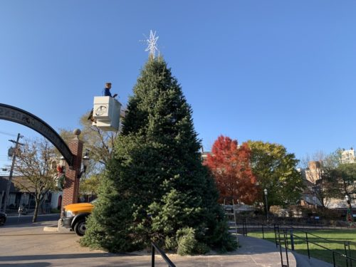 red bank, nj, christmas tree, riverside gardens park