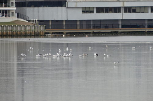 RED BANK, nj, navesink river ice