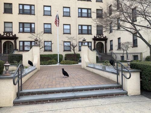 red bank nj turkey vulture