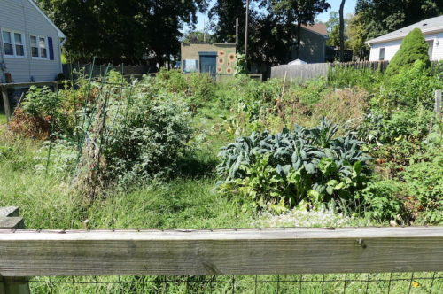 red bank community garden