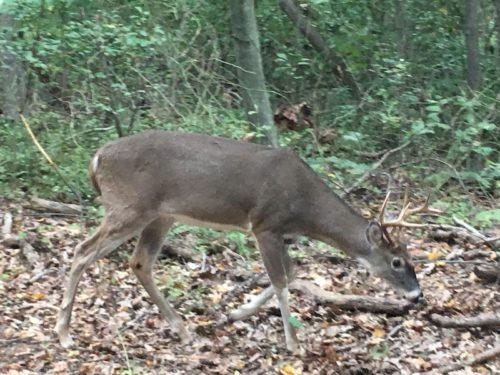deer hartshorne woods