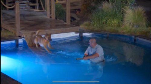 hunter balmer america's top dog.jpg